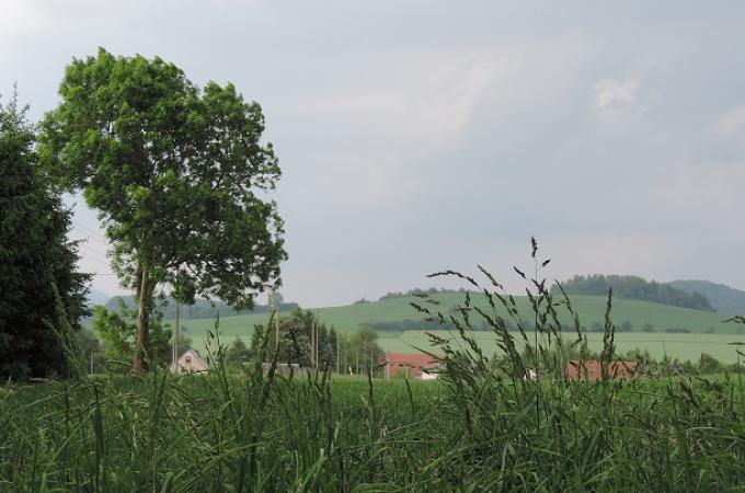 Göthekopf