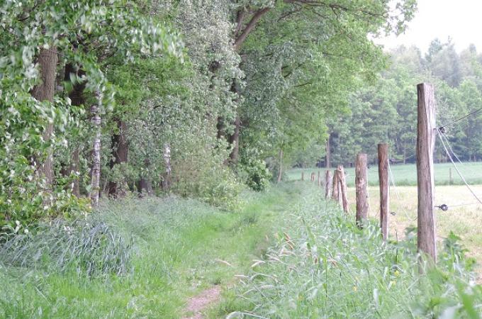 Richtung schwarzer Teich 3