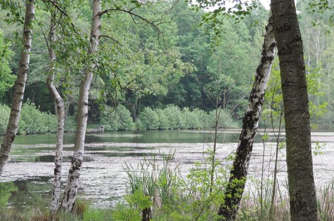 Schwarzer Teich 1