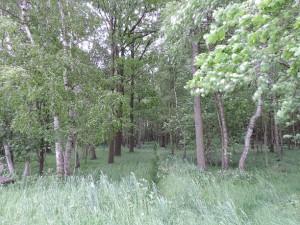 Richtung schwarzer Teich 2