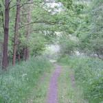 Richtung schwarzer Teich 6